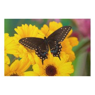 Black Swallowtail butterfly Wood Wall Decor