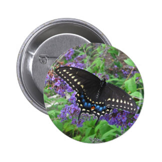 Black Swallowtail ~ button