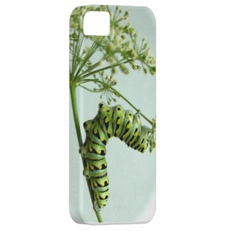 Black Swallowtail Caterpillar eating parsley Barely There iPhone 5 Case