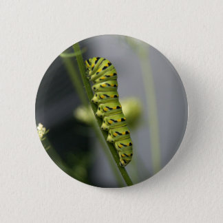 Black swallowtail caterpillar (parsleyworm) on Dil 6 Cm Round Badge