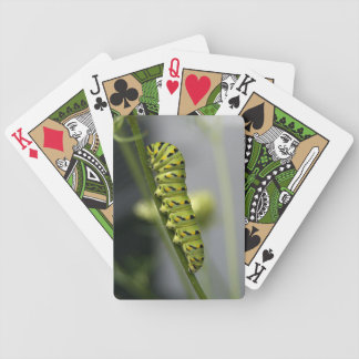 Black swallowtail caterpillar (parsleyworm) on Dil Bicycle Playing Cards