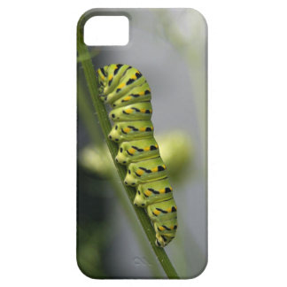 Black swallowtail caterpillar (parsleyworm) on Dil Case For The iPhone 5