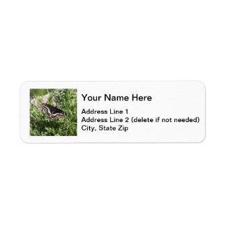 Black Swallowtail Return Address Label