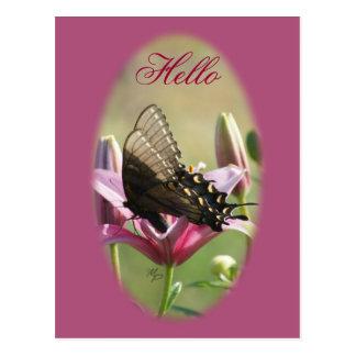 Black Swallowtail on Lily Blank Postcard