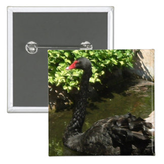 Black Swan 15 Cm Square Badge