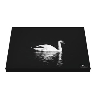 "Black Swan (24.00"" x 16.00""), 1.5"", Single Canvas Print"