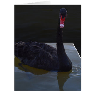 Black Swan Droplets In The Pond, Card
