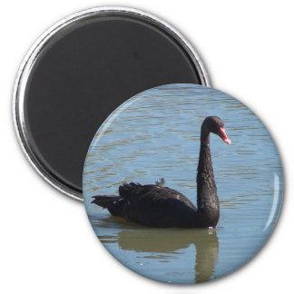 Black Swan Fridge Magnet