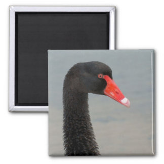Black Swan Refrigerator Magnet
