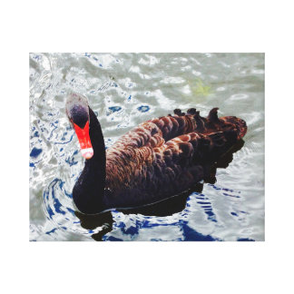Black swan on rippling blue water canvas print