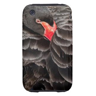 Black swan resting iPhone 3 tough covers