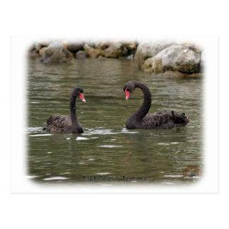 Black Swans 9Y353D-021 Postcard