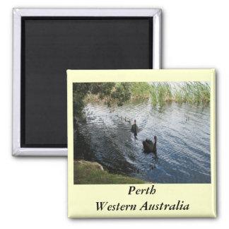 Black Swans, Perth Magnets