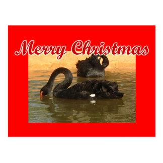 Black Swans Postcard