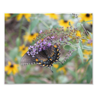 Black tailed butterfly photographic print