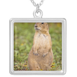 Black-tailed Prairie Dog Cynomys Square Pendant Necklace