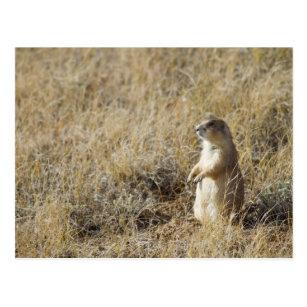 Black Tailed Prairie Dog Gifts On Zazzle Au