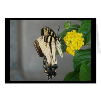 Black & Tan Monarch Butterfly Greeting Card