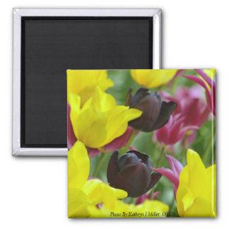 Black Tulips Square Magnet
