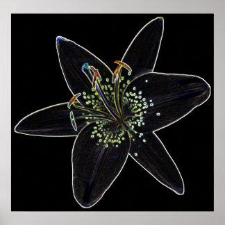 Black-Velvet Lily Poster