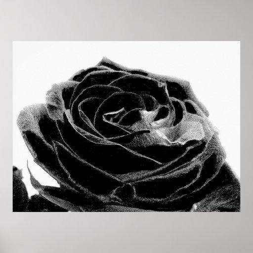black Velvet Posters