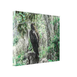 Black Vulture in tree looking for new prey Canvas