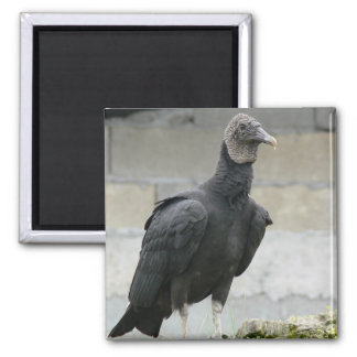 Black Vulture On The Hill Magnet