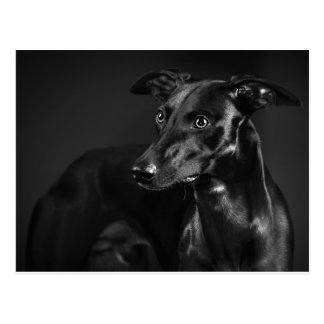 Black whippet postcard