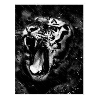 Black & White Beautiful Tiger Head Wildlife Postcard