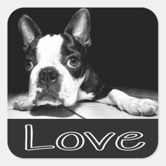 Black White Boston Terrier Puppy Dog Sticker