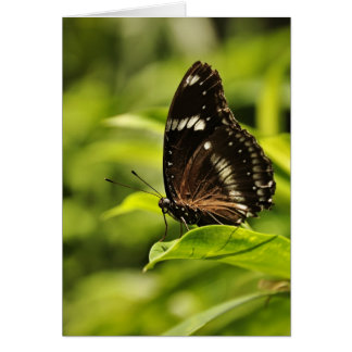 Black white butterfly on green leaf Greeting Cards