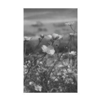 Black & White Canvas Print David Cameron