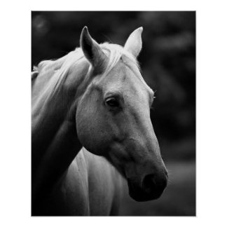 Black White Closeup Horse Poster