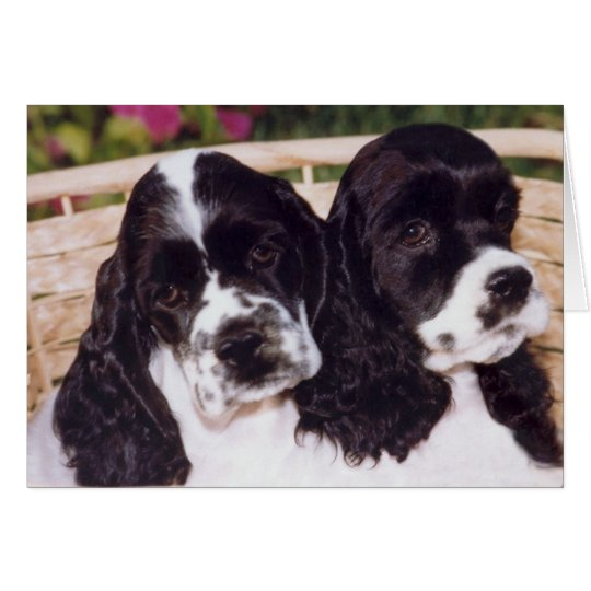 Black & White Cocker puppy card