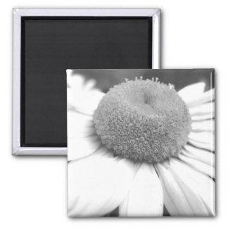 Black & White Daisy Magnet