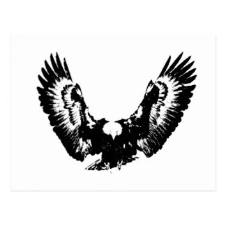 Black & White Eagle Postcard