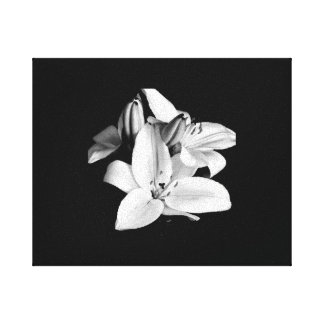 Black & White Flower Stretched Canvas Print