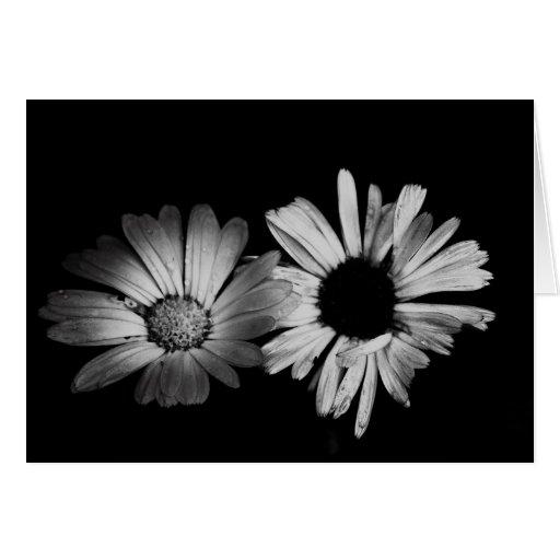 Black & White Flowers Greeting Card