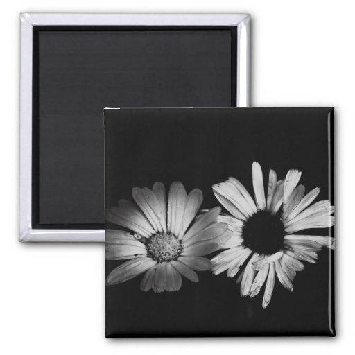 Black & White Flowers Fridge Magnet