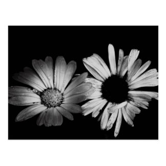 Black White Flowers Postcards