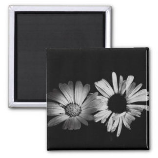 Black & White Flowers Square Magnet