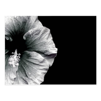 Black & White Hibiscus Flower Photography Postcard