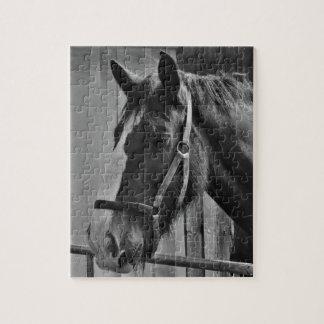 Black White Horse - Animal Photography Art Jigsaw Puzzle