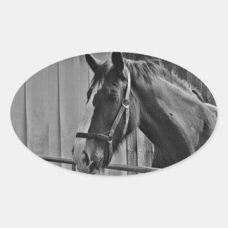 Black White Horse - Animal Photography Art Oval Sticker