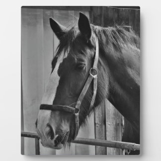 Black White Horse - Animal Photography Art Plaque