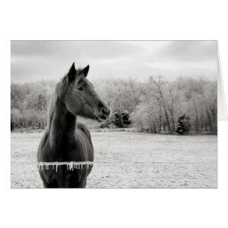 Black & White Horse Greeting Card