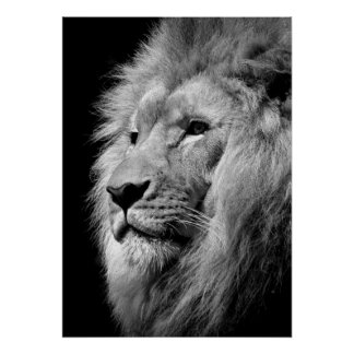 Black & White Lion / Animal Photography Art Poster