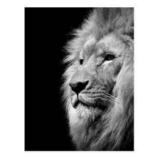 Black White Lion Portrait - Animal Photography Postcard