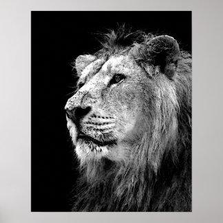 Black White Lion Poster - Animal Photography Art