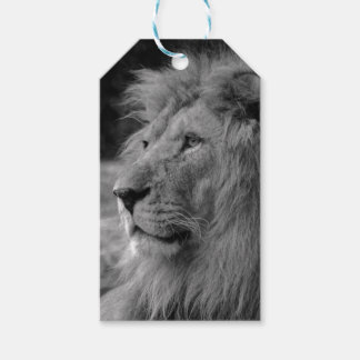 Black & White Lion - Wild Animal